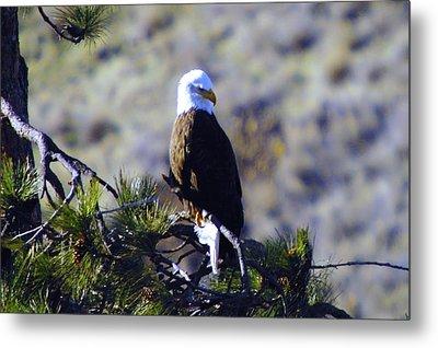 An Eagle In The Sun Metal Print by Jeff Swan