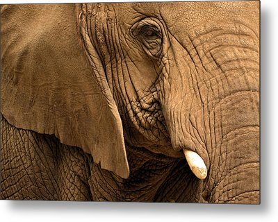 Metal Print featuring the photograph An Elephant's Eye by Nadalyn Larsen