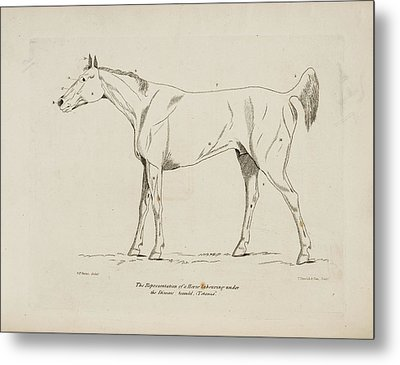 An Illustration Of A Horse Metal Print