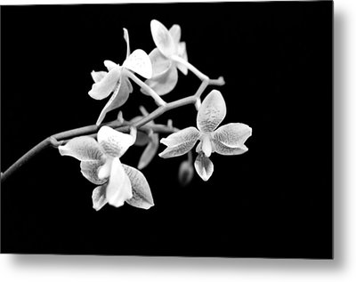An Orchid  Metal Print