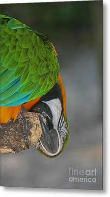 An Unusual Parrot View Metal Print by Joan McArthur