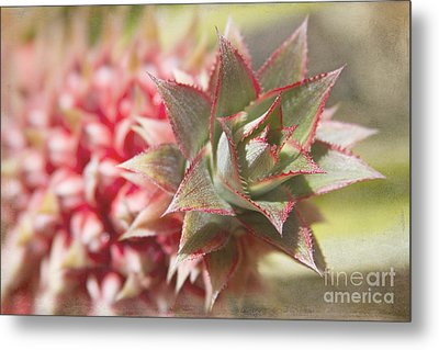 Ananas Comosus - Pink Ornamental Pineapple Metal Print by Sharon Mau