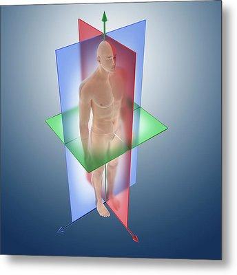 Anatomical Orientation Planes Metal Print