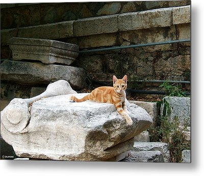 Ancient Agora Kitty Metal Print