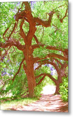 Ancient Cottonwood Trees Metal Print by Lanjee Chee