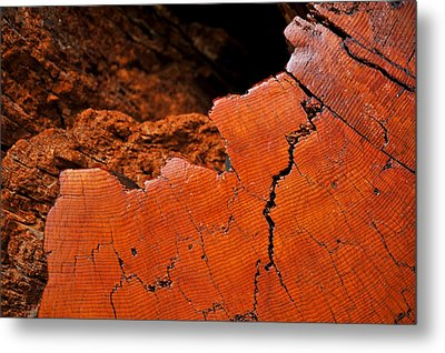 Ancient Log Metal Print