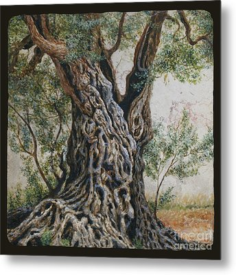 Ancient Olive Tree Trunk Metal Print
