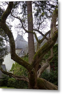 Ancient Tree At Chateau De Chenonceau Metal Print by Susan Alvaro