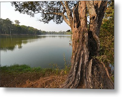 Ancient Tree Cambodia Metal Print by Bill Mock