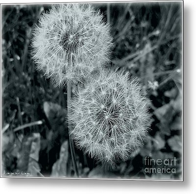 Metal Print featuring the photograph ...and I Huff... And I Puff... by Mariana Costa Weldon