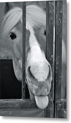 Metal Print featuring the photograph And That's What I Think Of That by Barbara Dudley