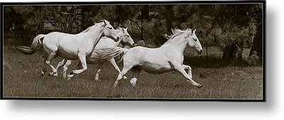 And The Race Is On Metal Print by Wes and Dotty Weber