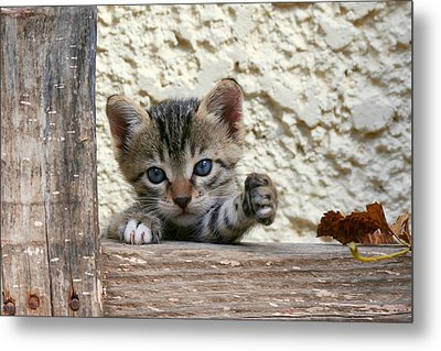 And Two Milk Please Metal Print