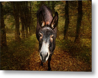 And You Are  ??? Metal Print by Donna Kennedy
