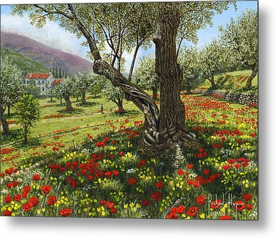 Andalucian Olive Grove Metal Print by Richard Harpum