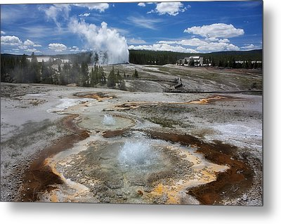 Anemone And Old Faithful In Concert Metal Print