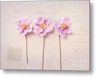 Anemone Trio Metal Print by Sylvia Cook