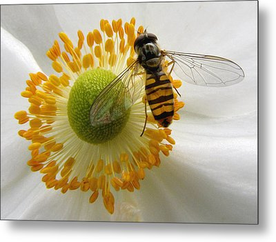Anemone With Visitor Metal Print by Jacqi Elmslie