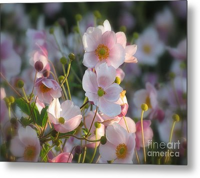 Anemones Soft Beauty Metal Print by France Laliberte