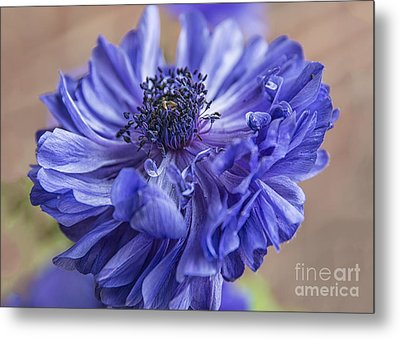 Anemone Blues I Metal Print by Terry Rowe