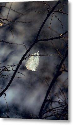 Angel Feather Metal Print