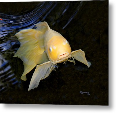 Metal Print featuring the photograph Angel Koi by Mariarosa Rockefeller