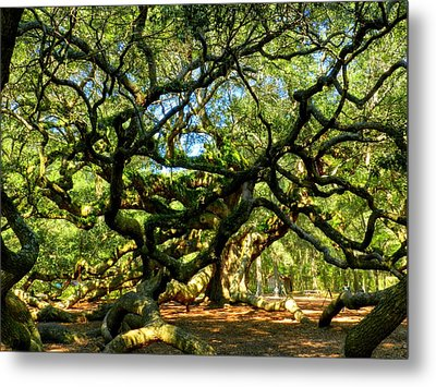 Angel Oak 006 Metal Print by Lance Vaughn