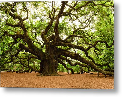 Angel Oak Tree 2009 Metal Print by Louis Dallara