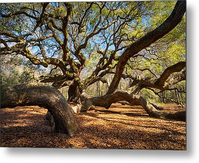 Angel Oak Tree Charleston Sc Metal Print by Dave Allen