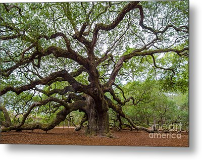 Metal Print featuring the photograph Angel Oak Tree by Dale Powell