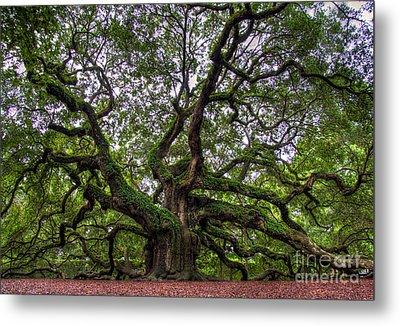 Angel Oak Tree Metal Print by Douglas Stucky