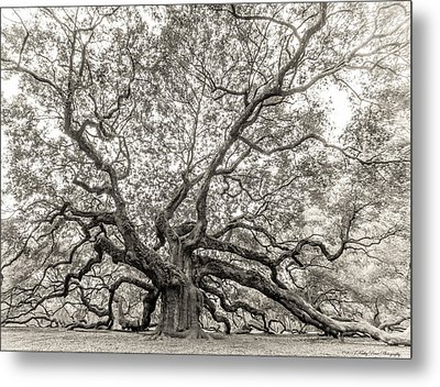 Angel Oak Tree Metal Print by Kathy Ponce