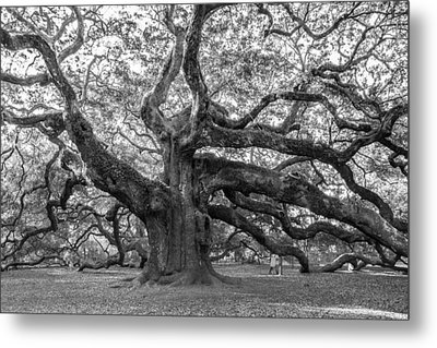 Metal Print featuring the photograph Angel Oak Tree by Patricia Schaefer