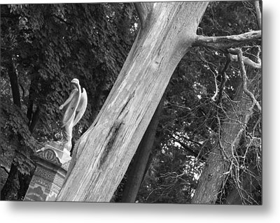 Metal Print featuring the photograph Angel by Steven Macanka