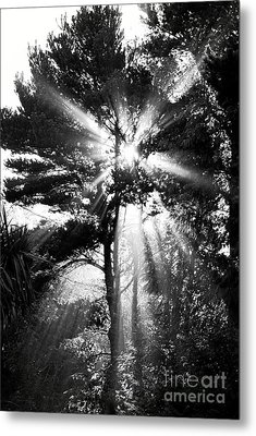 Angel Sun Metal Print