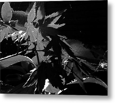Angels Or Dragons B/w Metal Print by Martin Howard