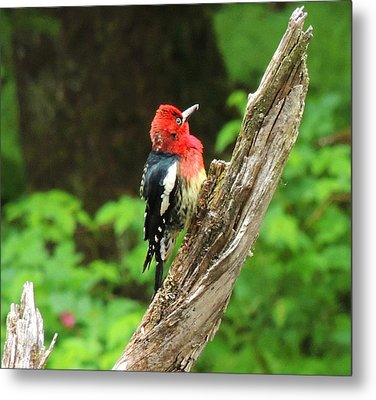 Metal Print featuring the photograph Angry Bird by Karen Horn