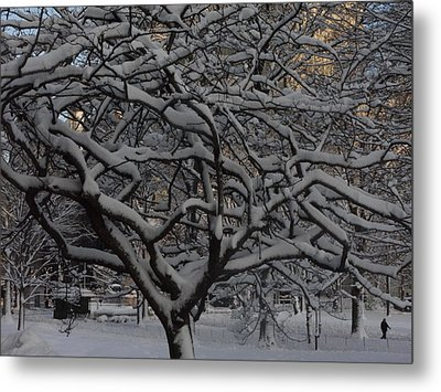 Metal Print featuring the photograph Angular Tree With Snow by Winifred Butler