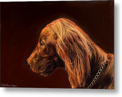 Metal Print featuring the photograph Angus Irish Red Setter by Wallaroo Images