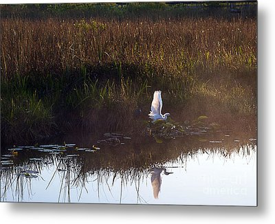Anhinga Trail Sunrise Metal Print by Bruce Bain
