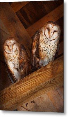 Animal - Bird - A Couple Of Barn Owls Metal Print by Mike Savad