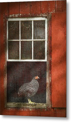 Animal - Bird - Chicken In A Window Metal Print by Mike Savad