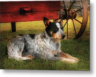 Animal - Dog - Always Faithful Metal Print by Mike Savad