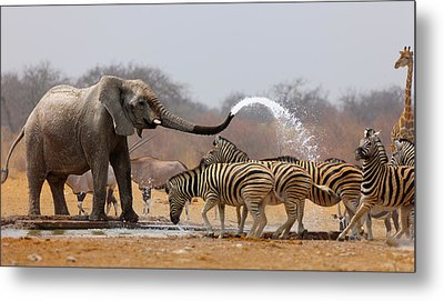Animal Humour Metal Print by Johan Swanepoel