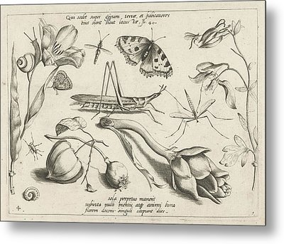 Animals And Plants Around A Grasshopper And A Artishock Metal Print by Jacob Hoefnagel And Joris Hoefnagel