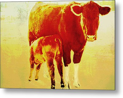 Animals Cow And Calf Metal Print by Ann Powell