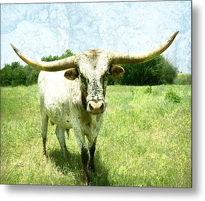 animals - cows -Longhorn in Summer Pasture Metal Print by Ann Powell