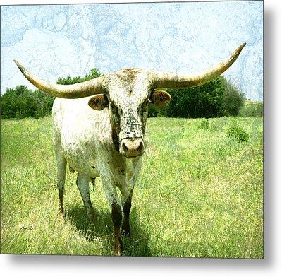 animals - cows -Longhorn in Summer Pasture Metal Print