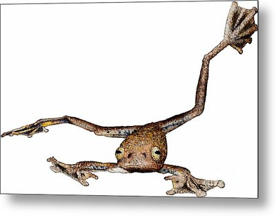 Annam Flying Frog Metal Print
