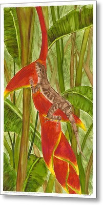 Anolis Humilis Metal Print by Cindy Hitchcock